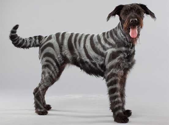 Pet Paint Product Image